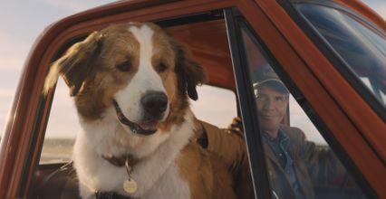 รีวิวหนัง A Dog's Journey หมา เป้าหมาย และเด็กชายของผม 2