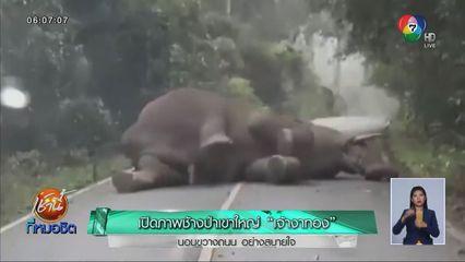 เปิดภาพช้างป่าเขาใหญ่ เจ้างาทอง นอนขวางถนน อย่างสบายใจ