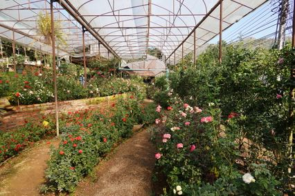 """""""เชียงใหม่ ถึง ลำพูน"""" เที่ยวชิล ๆ ท่ามกลางสวนดอกไม้"""