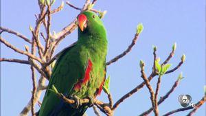 สารคดี Bird of Paradise ท่องโลกวิหคแห่งพงไพร ตอนจบ