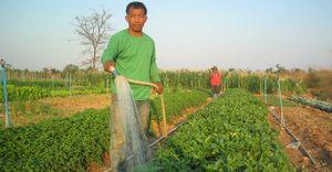 คาถาพืชผล ช่วยให้พืชผลโตเร็วและคุณภาพดี