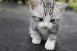 ความเชื่อเกี่ยวกับ แมว สัตว์เลี้ยงคู่ใจ