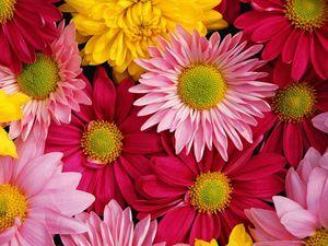 ทายใจทายนิสัย ดอกไม้แห่งความรัก