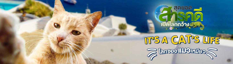 ดูสารคดีออนไลน์ It's A Cat's Life โลกของแมวเหมียว